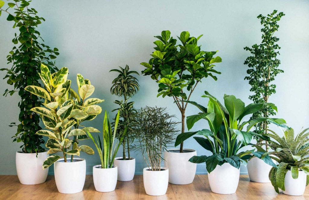 Make Your Home Refresh and Healthy with some Indoor Plants
